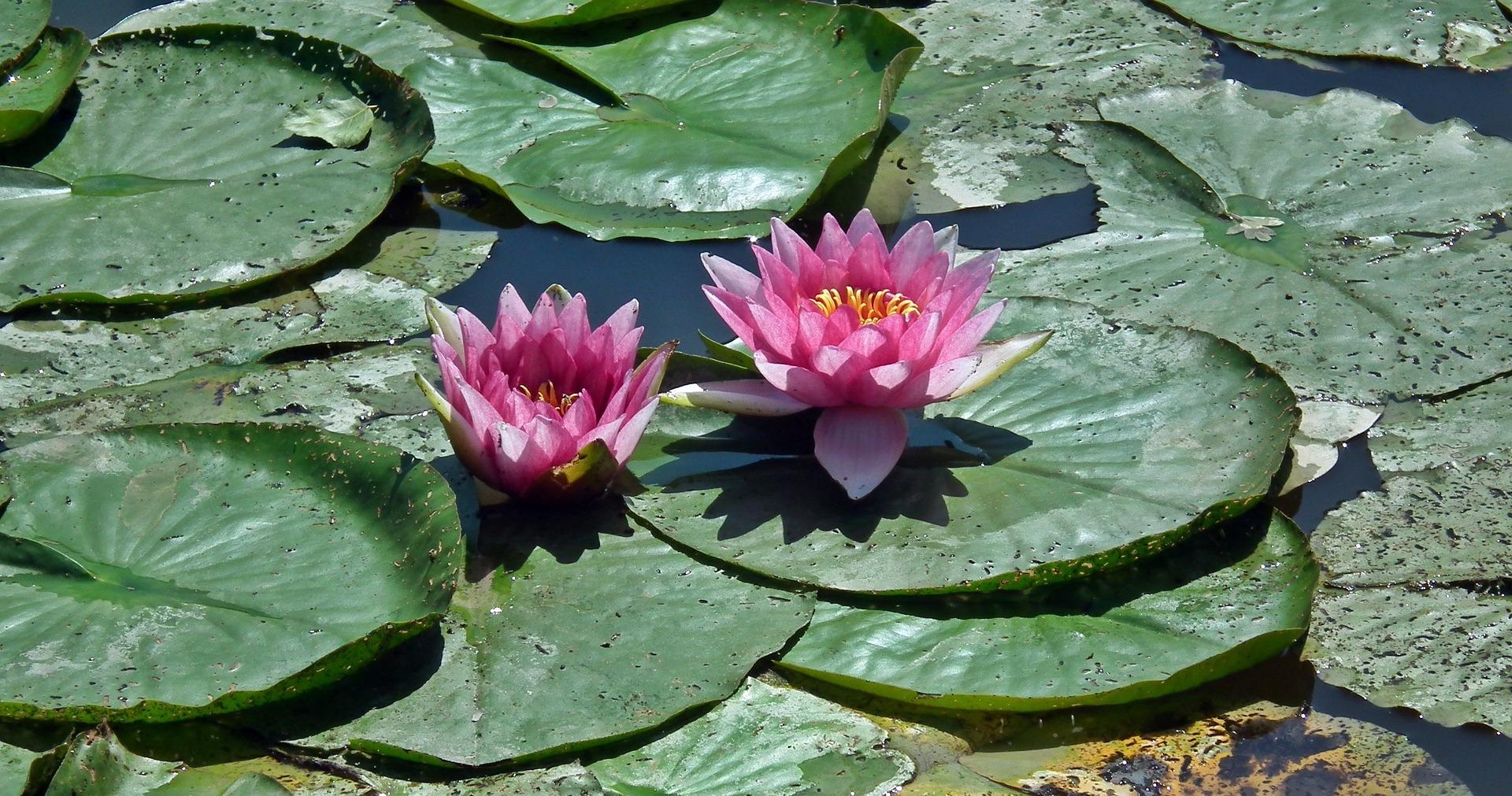 flower-3101425_1920