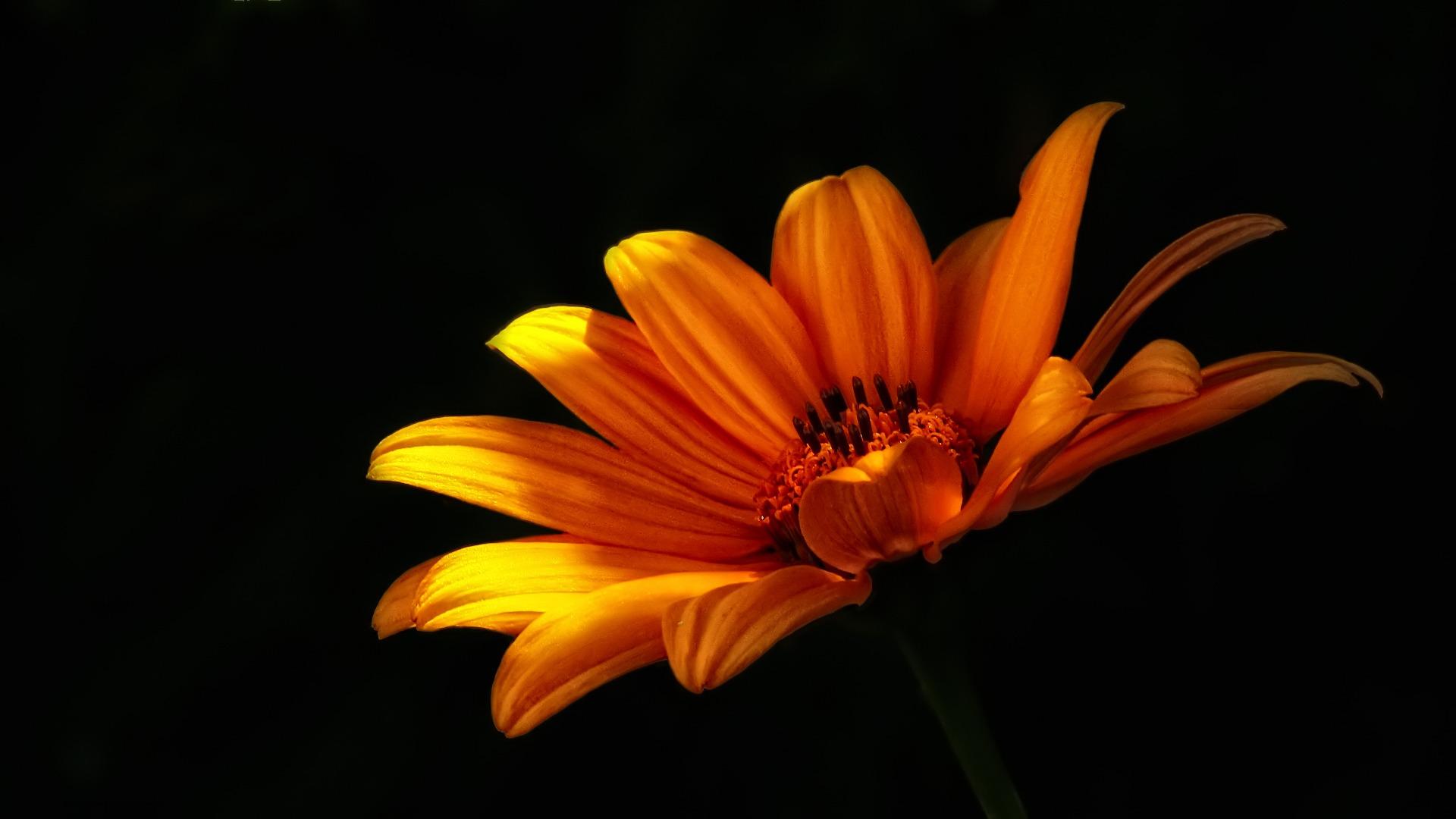 flower-52358